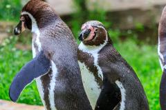 Berlin Zoo, Berlin, Tyskland