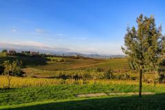 Azienda Agricola Musignano, Toscana, Italien