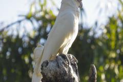 Noosa National Park, Queensland, Australien