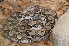 Australia Zoo, Queensland, Australien. Slanger i alle størrelser, hvis man er til den slags.