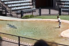 Australia Zoo, Queensland, Australien. I Steve Irwins ånd, et lille show med en af saltvandskrokodillerne.