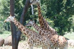 Australia Zoo, Queensland, Australien.