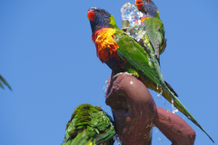 Adelaide Botanic Garden, Adelaide, South Australia, Australien