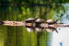 Alligatortur med Airboat Adventures, New Orleans, Louisiana, USA